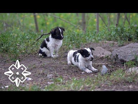 Don't Hug Chernobyl Puppies