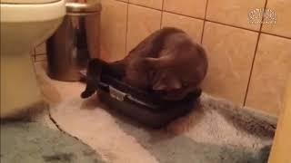 Самые угарные коты. Приколы