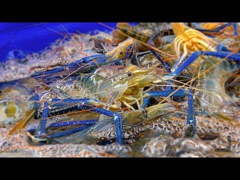 The Best Seafood From Around the world for Street Food Compilation | Must see! before Travel