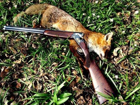 Liška & zajíc