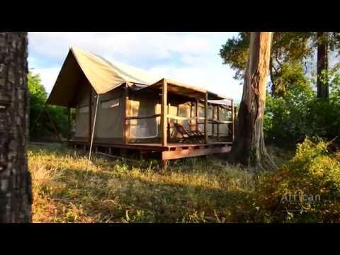 Linyanti Ebony, Chobe Enclave, Botswana