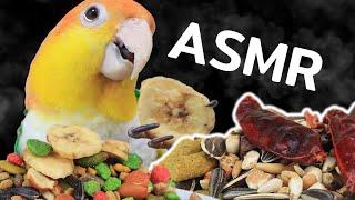 ถ้าได้ดูนกกินจะเป็นยังไง?! | ASMR Parrot eating sound