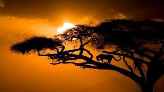 Relaxing Music - Música Relajante Vol. II: África.