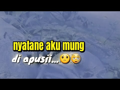 Story WA Lagu Dangdut Mp3
