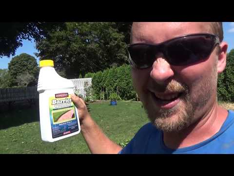 How to get rid of weeds in flower beds