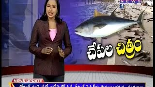 Reason behind Fish rain in Andhra pradesh ll  Fishes Fell from Sky -Part01 - Mahaa Telugu News