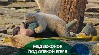 Заблудившийся медвежонок стал маленьким кушвинцем