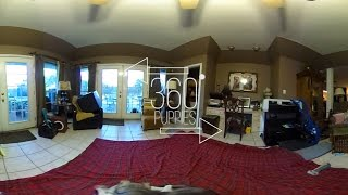 360 Degrees of Puppy Playtime