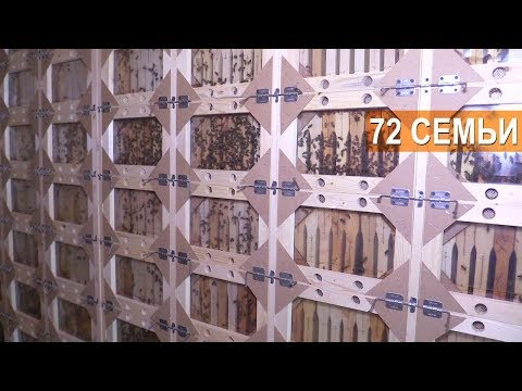 ПЧЕЛОВОДСТВО. Кассетный павильон на 72 семьи. ПАСЕКА БЕРЕНДЕЙ