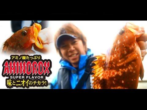 """AMINOROX ワームシリーズ"" で キジハタ攻略 / 吉岡進"