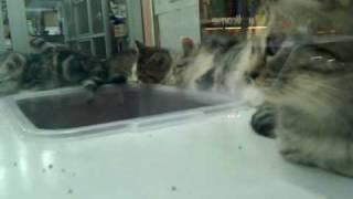 Hong Kong: kitten store.