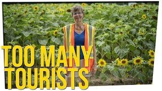 Sunflower Farm Closes to Stop Tourists ft. Steve Greene
