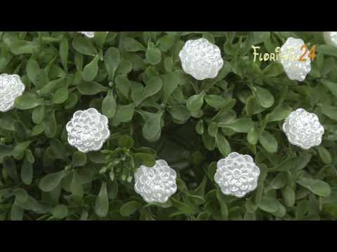 Floristik24 Dekonadel Blume Weiß Ø2cm H6cm 24St