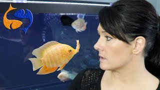 Feeding Aquarium Fish How Much And How Often? Don't Over Feed Fish! Fixing My Worst Video!