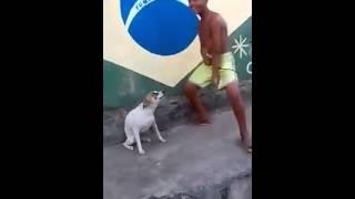 Cachorro dançando no carnaval ahh mizeravi