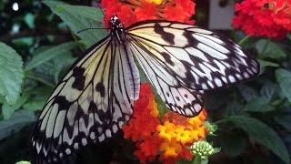 2,000 butterflies, moths take flight at Montreal Botanical Gardens a 360° view