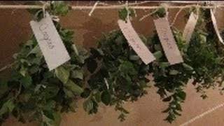 Hanging Herbs To Dry!