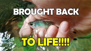 You CAN resuscitate a fish!