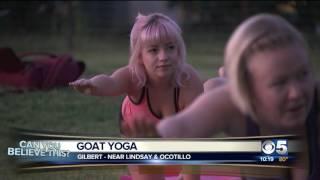 Goat Yoga Gilbert CBS News Ch 5