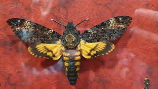 Выставка-ярмарка насекомых в Москве. Завтра можно успеть!