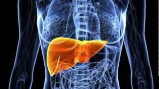 Liver Disease - Symptoms