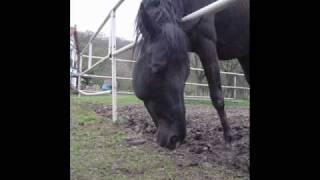 Jedu na koni