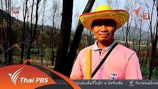ที่นี่ Thai PBS - นักข่าวพลเมือง : ป่าภูหลง อ.ภูเขียว ชัยภูมิ (17 พ.ค. 59)