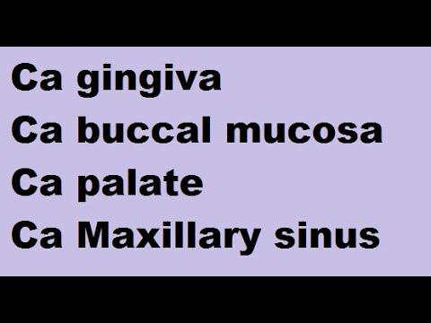 Mușchiul platyhelminthes planaria