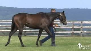 preview picture of video 'Lot 200 - F. / Vale Of York & Shakeyourbody - Haras de Grandcamp'