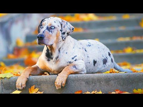 12 World's RAREST Dog Breeds Ever