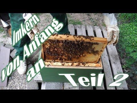 , title : 'Imkern von Anfang an - Teil 2 - Der erste Ableger - Das erste Bienenvolk - Bienen für Anfänger