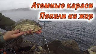 Рыбалка в сосновом бору на сбросе