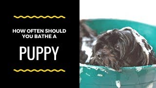 How Often Should You Bathe a Puppy