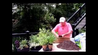 Best Way To Grow Herbs On Patios, Decks & Outdoor Areas