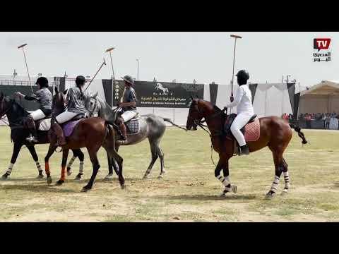 افتتاح مهرجان الخيول العربية الأصيلة بمحافظة الشرقية بحضور المحافظ