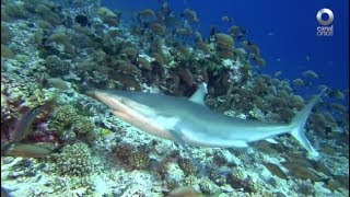 Factor Ciencia - Maravillas marinas, parte 2