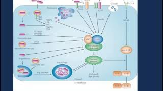 Procalcitonin: Utility in the Intensive Care Unit (ICU)