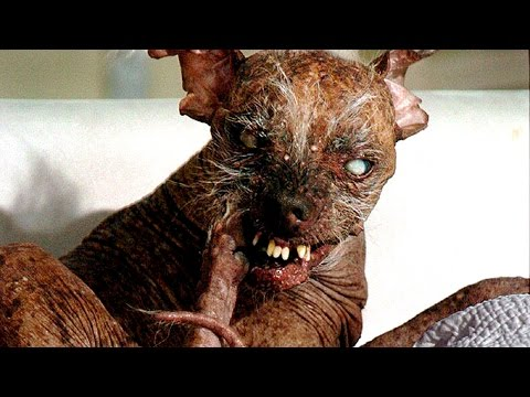 15 World's Ugliest Dogs Or Cutest Dogs