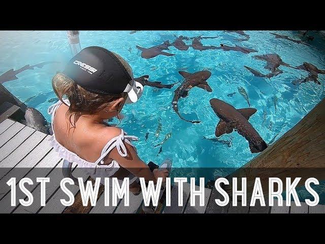 Kids Swimming with Sharks!! /// WEEK 107 : Bahamas