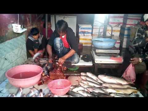 fish farm in tandi chitwan - смотреть онлайн на Hah Life