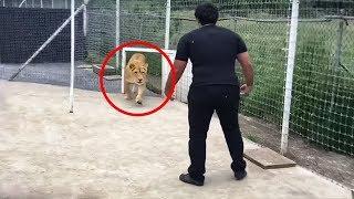 L'Uomo ha sempre avuto come compagni degli animali domestici. Tuttavia, esistono delle persone che hanno scelto di addomesticare degli animali abbastanza… strani!
