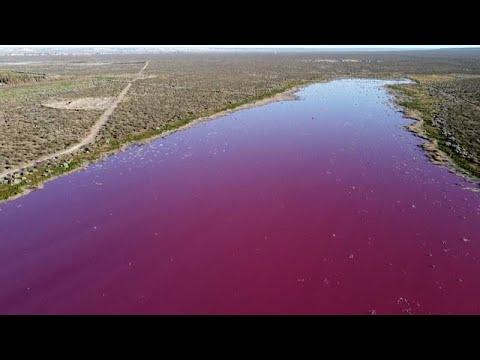 Video: Laguna Corfo contaminada