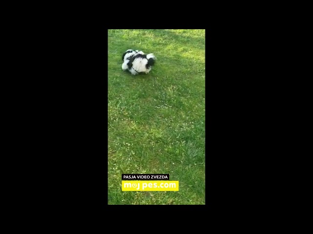 Dodo – Video natečaj 2020 – Revija Moj Pes #Dodo #MojPes