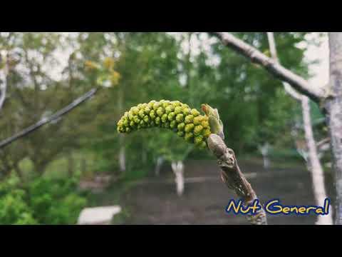 for eu. Nut's General