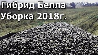 Уборка подсолнуха. Гибрид Белла 2018г.  #СельхозТехника ТВ