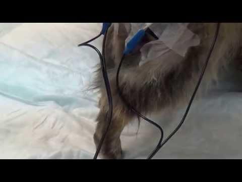 Лечение паралича  у животных