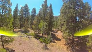 FPV in the forest.