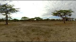 360 Video Tanzania Wildlife Film trip  - Photos of Africa VR Safari