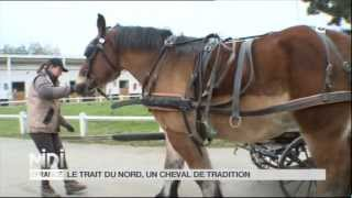 preview picture of video 'Le  Trait du nord, un cheval de tradition'