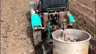 Посадка картофеля самодельной картофелесажалкой.